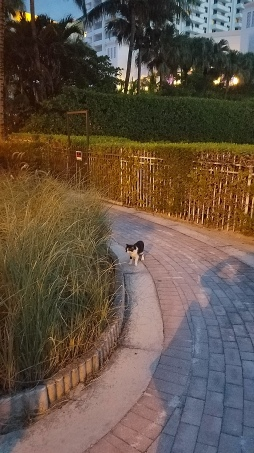 Path-view-cat
